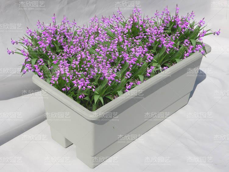 绿化PP花盆